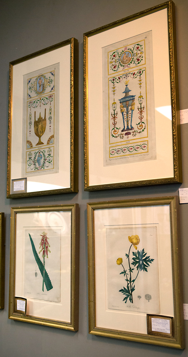 "Beautifully framed Michangelo Pergolesi Engavings and Joseph Roques Botanticals ""Phytographie medicale"""